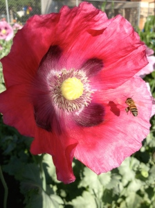 glory bee